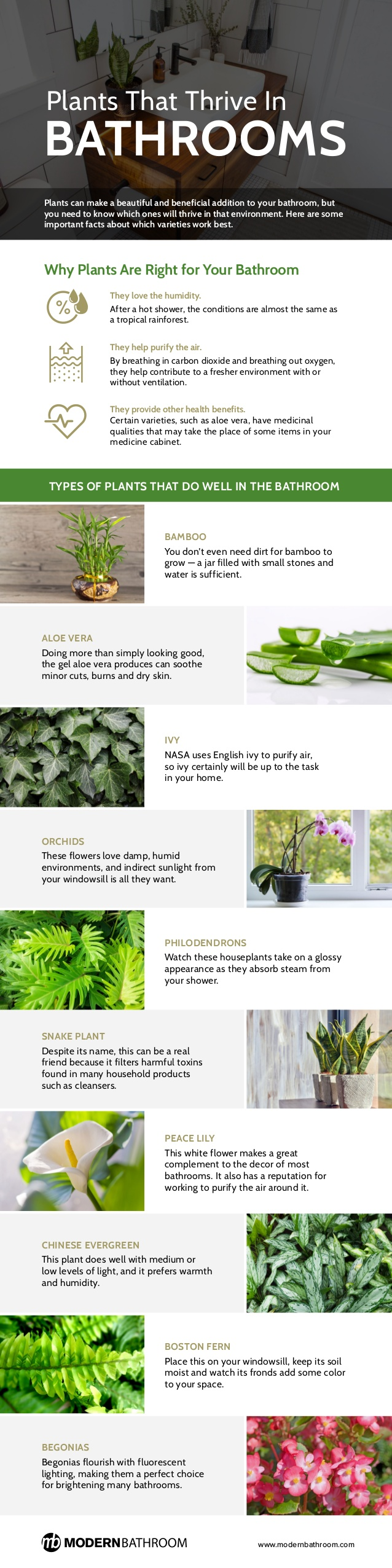 Plants That Trive In Bathrooms Infographic - RUNA on tropical garden bathroom, bamboo plant bathroom, tropical fish bathroom, tropical stone bathroom, tropical design bathroom,